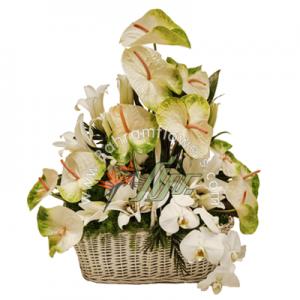 سبد گل سایز متوسط سفید